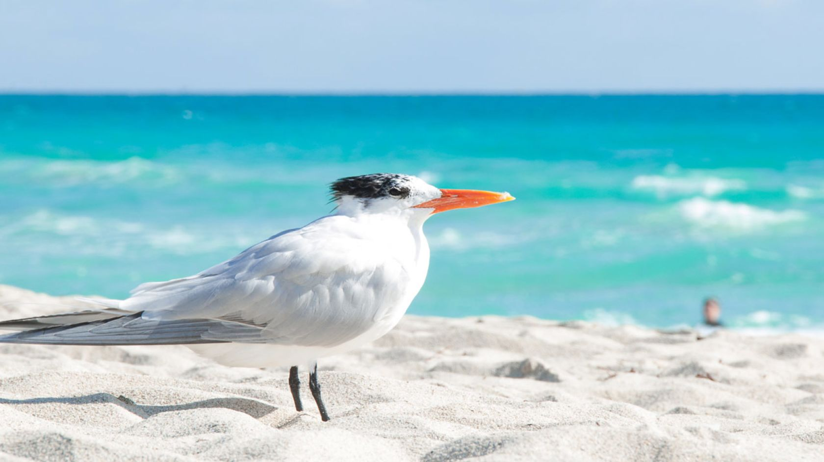 A Bird Sitting On Top Of A Sandy Beach